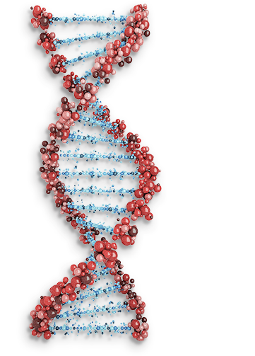 DNA double helix representing genetic risk